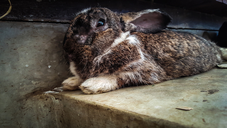 Brown rabbit on relax try to sleep