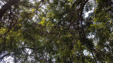 photo taken from under a tree at day Stock Photo