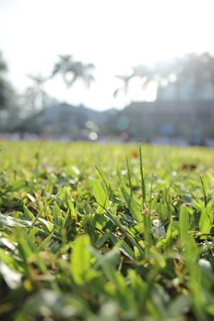 grass on the green field is taken in portrait Stock Photo