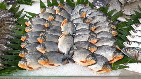Fresh Seafood desplay on local market store