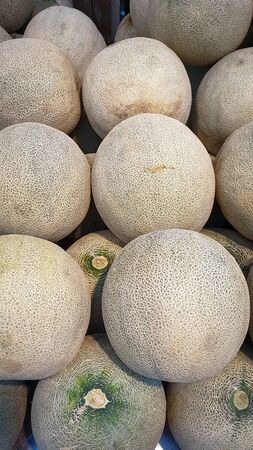 The new Melon fruit in the harvest is ready for sale