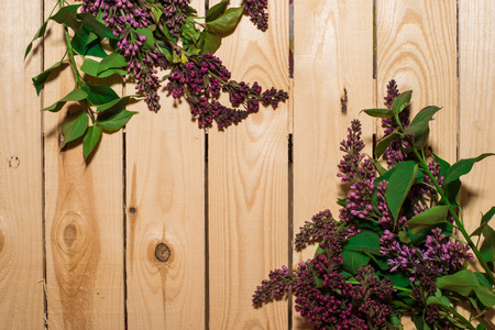 Lilac flower on woody background, spring mood, natural texture