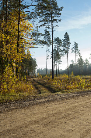 Wide track and field in the autumn yellow forest photo
