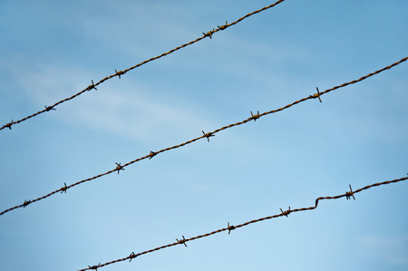 Barbed wire on blue sky background  Sharp metal fence  photo