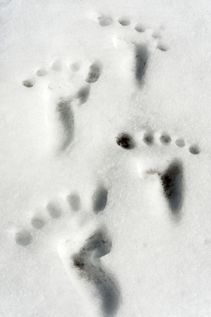 Small traces footprint imitation on snow surface   photo