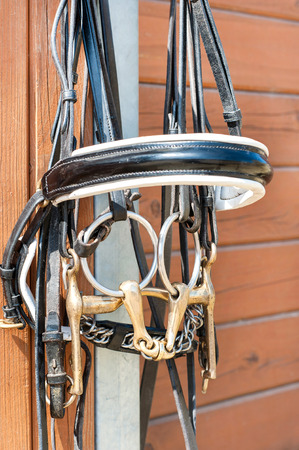 bridle: Horse bridle hanging on stable wooden door. Summertime closeup outdoors.