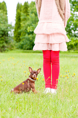 toyterrier: Small brown toy-terrier near young girl owner legs in summer green park. Multicolored outdoors image.