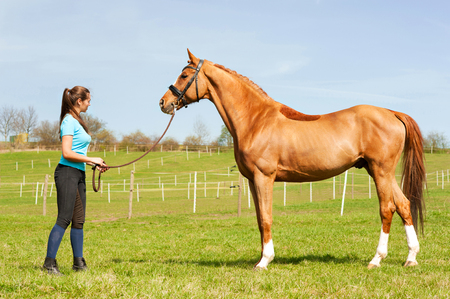 Young woman riding trainer holding purebred chestnut horse. Exterior image with side view. Multicolored summertime outdoors image. Archivio Fotografico
