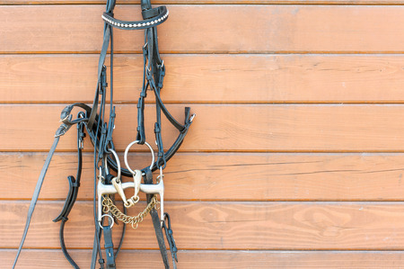 bridle: Horse bridle with decoration hanging on stable wooden wall. Front view. Summertime closeup outdoors.