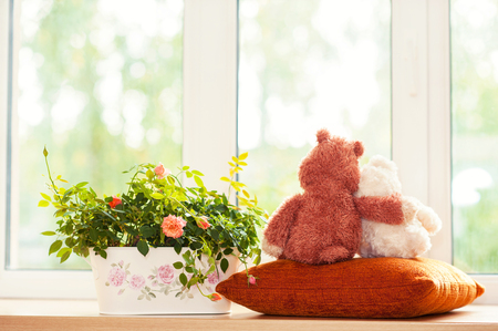 Two embracing teddy bear toys  looking through the window sitting on window-sill near pot with rose flowers. Indoors multicolored horizontal image with filter.