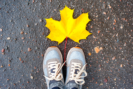 personal point of view: Autumn. Looking at big maple yellow leaf and stylish woman sneakers on asphalt from above. Vibrant outdoors horizontal image.