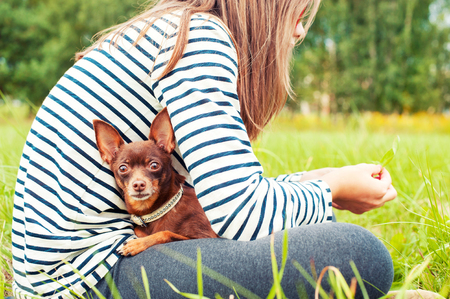 toyterrier: Attentive eyes of small brown toy-terrier. Girl holding dog on hands sitting on green grass of summer park. Multicolored horizontal outdoors image.