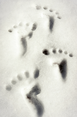 empty handed: Small tracesfootprint imitation on white winter snow surface. Outdoors Closeup vertical image. Stock Photo
