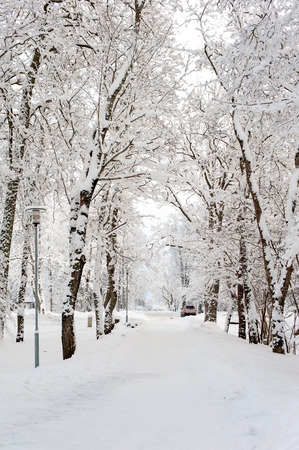 sigulda: Beautiful winter alley-corridor of woods under the snow in Sigulda, Latvia. Bright outdoors vertical image.