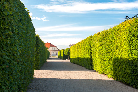 topiary: Alley of square shaped topiary green trees with hedge on background in ornamental garden on a blue sky background in Rundale royal. Latvia. Vibrant summertime outdoors horizontal image.