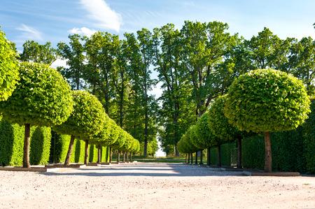 Callejón de árboles verdes topiara con cobertura en el fondo ornamental en el jardín sobre un fondo de cielo azul en Rundale real. Letonia. verano vibrante horizontal de la imagen en el exterior. Foto de archivo - 52443232