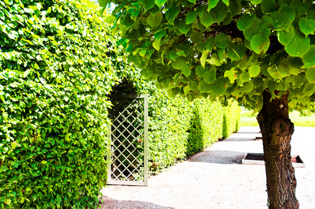 rundale: Ancient wooden grate gate in  green trees hedge around with ornamental garden beyond in Latvian Rundale park. Vibrant summertime outdoors horizontal image image with filter.