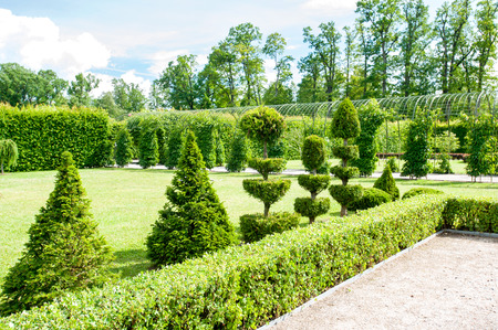 Round shaped topiary green trees with hedge on background in Rundale ornamental garden. latvia. Vibrant summertime outdoors horizontal image. Archivio Fotografico