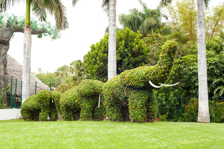 Elephant shaped topiary green trees in ornamental garden. Vibrant summertime outdoors horizontal image. Canary Islands, Tenerife, Spain.