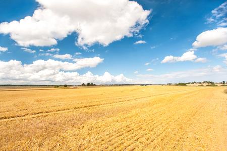cosechadora: Combinar el corte de trigo en el campo. Tiempo de cosecha. Vibrantes aire libre multicolores imagen horizontal.