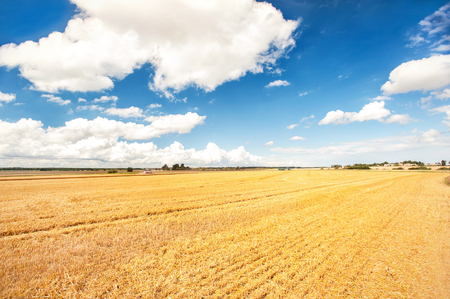 Golden wheat field on blue cloudy sky background. Harvest time. Vibrant multicolored outdoors horizontal image with copy space. Vintage filter. Stock Photo