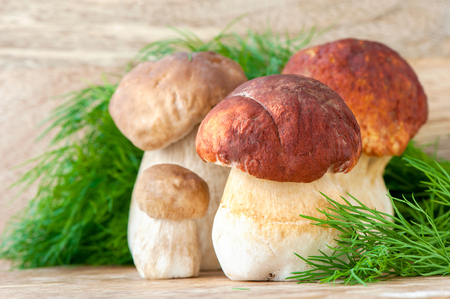 Ready to cook ready to eat! Crop of delicious porcini mushrooms on wooden background. Boletus Edulis (var. Aereus). Multicolored indoors horizontal still life image.
