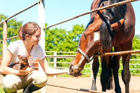 toyterrier: Young cheerful teenage redhead girl feeding her favorite chestnut horse and small dog. Vibrant colored outdoors horizontal image. Stock Photo