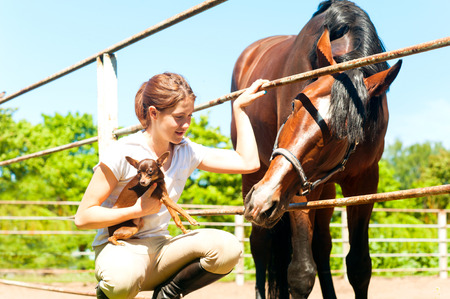 Young cheerful teenage redhead girl with her favorite chestnut horse and small dog. Vibrant colored outdoors horizontal image.