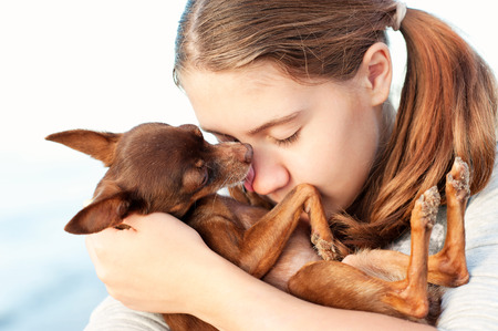 toyterrier: Closeup portrait of small brown toy-terrier dog kissing her favorite owner-teenage redhead girl. Colored outdoor horizontal image. Stock Photo