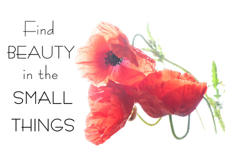 Find beauty in the small things. Motivation inspirational quote on red soft translucent poppy flower petals  background. Stock Photo