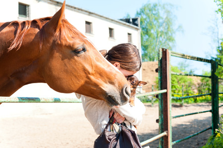 toyterrier: Big curious red horse trying to smell small dog with cheerful teenage girl. Vibrant colored outdoors horizontal image. Stock Photo