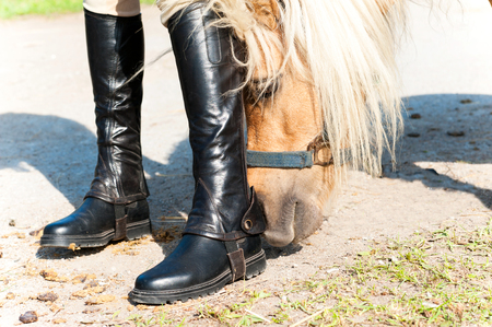 Curious pony smelling young girl equestrian leather boots. Colored outdoors horizontal image.