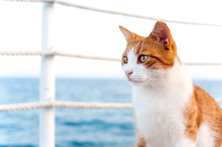Red cat sitting and waiting on harbor of Mediterranean sea. Vibrant colored horizontal summertime outdoors image with blue sky background. Stock Photo