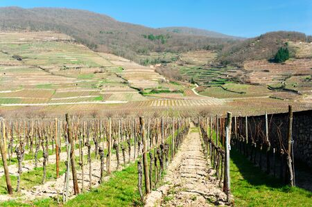 Springtime landscape of vineyard on hills and valley field. Alsace region, France. Vibrant outdoors horizontal image. Stock Photo