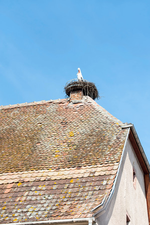 Stork sitting in nest on top of ancient tiled roof. Sunny day with blue clear cloudless sky background. Alsace region, France. Colored vertical image.