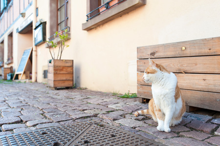 Red cat sitting on brick paved road in ancient street of France, Alsace region. Vibrant outdoors horizontal image. Stock Photo