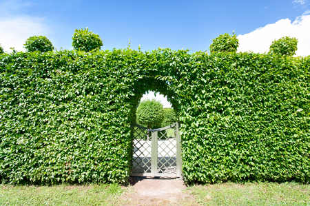 rundale: Round shaped topiary green trees hedge in ornamental garden with blue cloudless sky background. Latvia, Rundale. Vibrant summertime outdoors horizontal image.