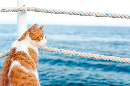 Cute red cat looking away sitting and waiting on harbor of Mediterranean sea coastline. View from backside. Vibrant colored horizontal summertime outdoors image with blue water background.