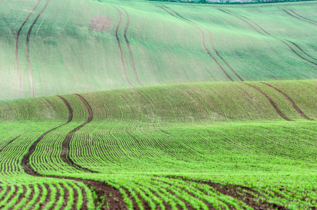 Curves of wavy rolling textured rural fields in moravia at springtime. Czech republic. Suitable for abstract background or pattern. Bright vibrant multicolored outdoors horizontal image.