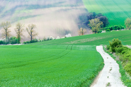 Rural landscape with green wavy ploughed fields and road in South Moravia, Czech Republic. Vibrant multicolored bright outdoors summertime horizontal image.