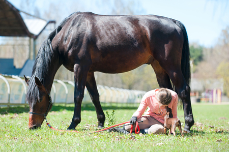 Young teenage girl with small dog sitting close to her chestnut horse on green grass. Vibrant multicolored springtime outdoors horizontal image.