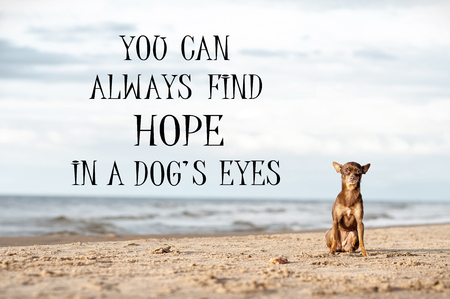 You can always find hope in a dogs eyes. Motivational inspirational quote with lonely abandoned little toy-terrier dog sitting alone on sea-side. Colored filtered outdoors filtered horizontal image. Stock Photo