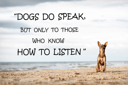 Dogs speak but but only to those who know how to listen. Motivational inspirational quote with lonely little toy-terrier dog sitting alone on sea-side. Colored filtered outdoors horizontal image.