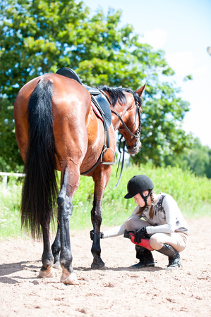Teenage equestrian girl in helmet sitting near her bay horse and checking for leg injury after sport training. Outdoors vertical colored image. Stockfoto