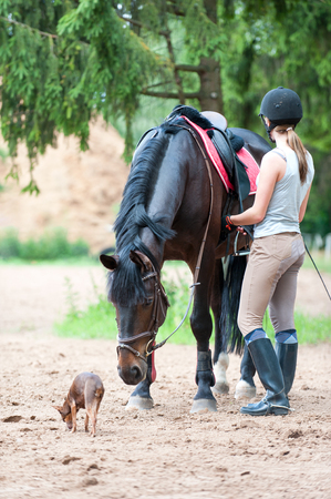Young teenage girl equestrian with small dog harnessing curious chestnut horse before training. Vibrant multicolored springtime outdoors vertical image.
