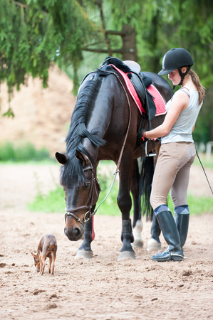 Curious horse wants to meet small dog. Young teenage lady equestrian with her best friends. Colored outdoors summertime vertical image. Stock Photo