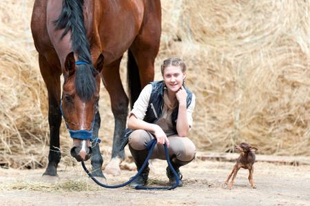 Pretty young teenage girl with plaited braids sitting close to her favorite red horse and small dog at farm yard on yellow hay/straw rolled stack background. Vibrant colored outdoors horizontal summertime image.