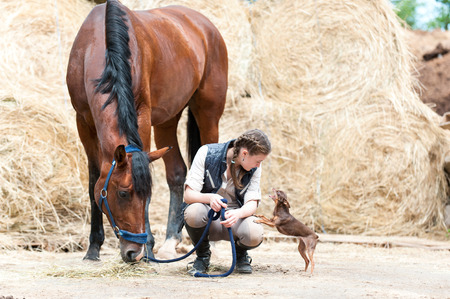 Teenage girl with plaited braids squatted sitting between her friends-bay horse and small toy-terrier dog. Outdoors horizontal image. Stockfoto