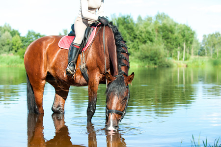 Horse drinking water in river after sport training in rays of sunlight. Multicolored vibrant outdoors horizontal summertime image Stock Photo