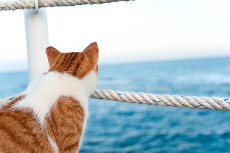 Lonely red cat looking away sitting and waiting on harbor of Mediterranean sea coastline. View from backside. Vibrant colored horizontal summertime outdoors image with blue water background. Stock Photo